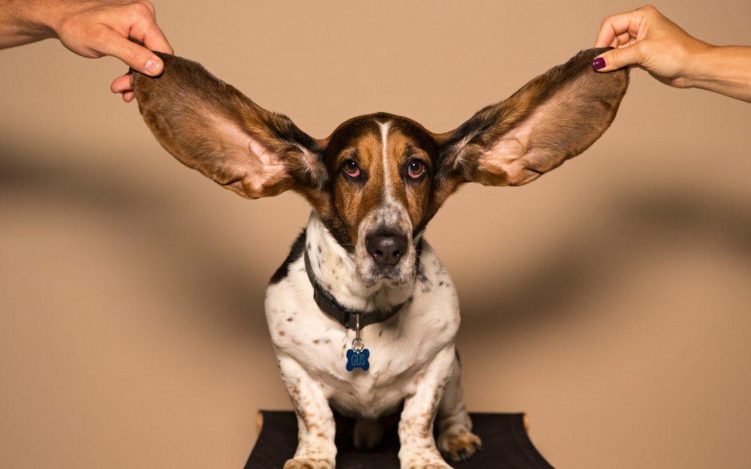 Pouquoi l'ouïe est-elle le plus fascinant des 5 sens ?